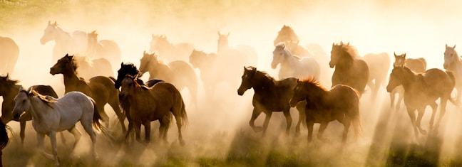 Running Horses 3