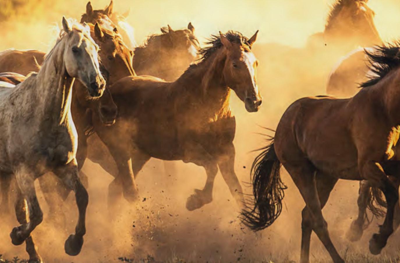 Running Horses 2