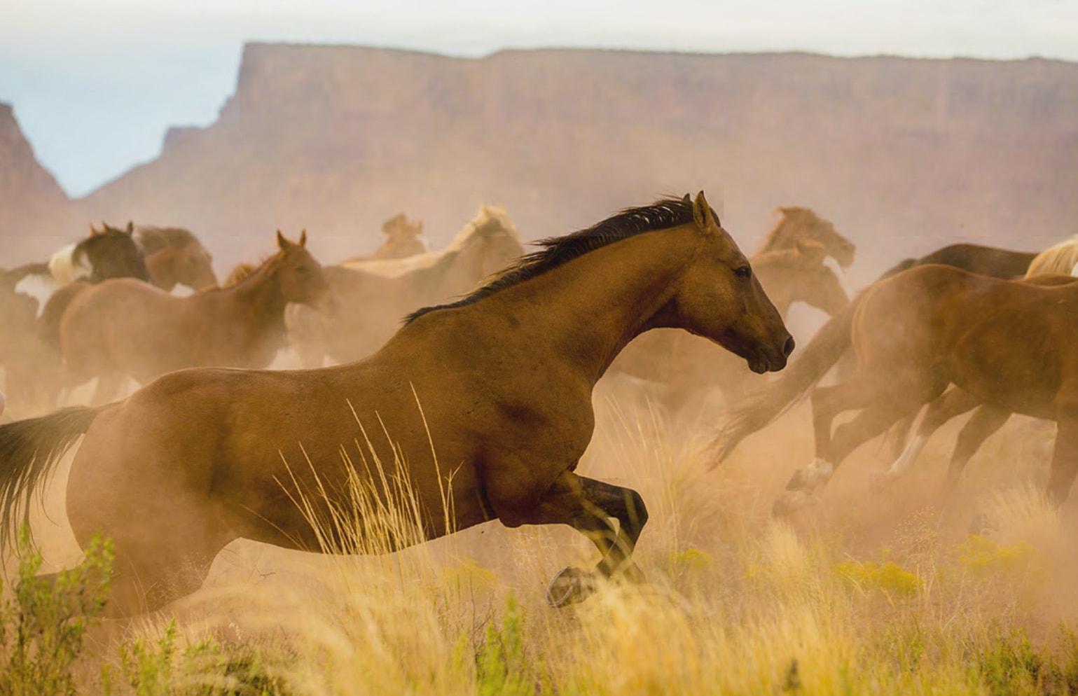 Running Horses 4
