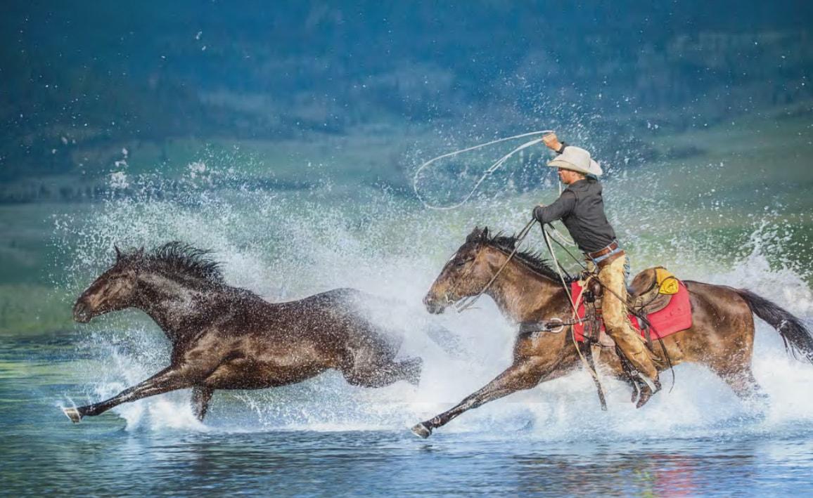 Horse Wrangler 1